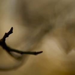 Bony Fingers of Autumn
