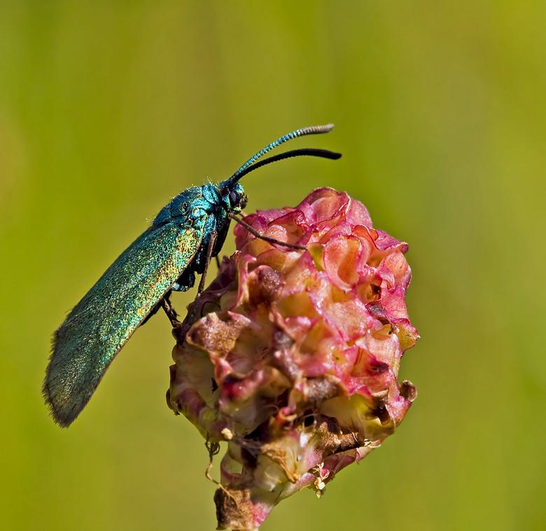 Metaalvlinder - We blijven nog even in de vlinder-scene. Beleef er heerlijke ontspannende momenten mee. Dus hoop jullie hiermee ook een plezier te doe