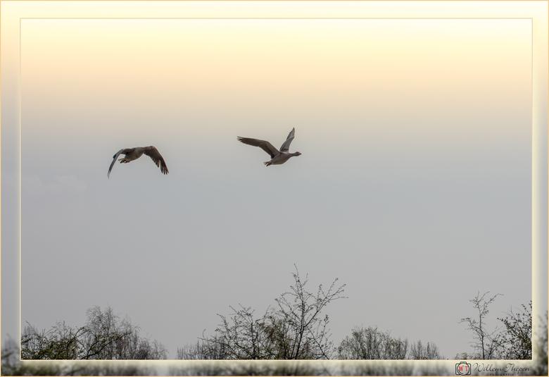 Vliegende Ganzen -