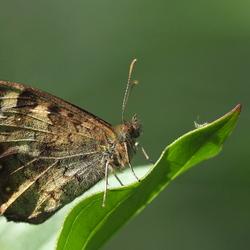 Vlindertijd...