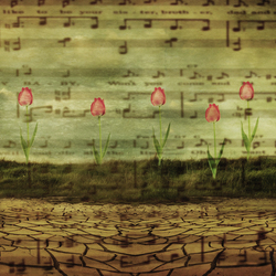 symphony of te tulps