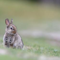 Jong konijntje