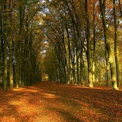 herfst bos pad