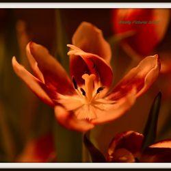 Tulpen en het voorjaar.