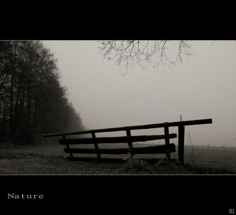 Nature - hekje in de mist
