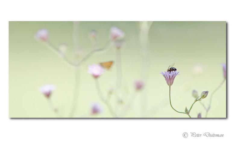 Spring - ..