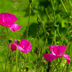 Nationale tuinweek