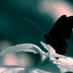 Butterfly silhouette - liberté fotografie