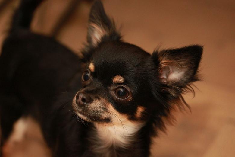 Molly - Het hondje van Valerie.