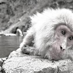 Prozac Monkey