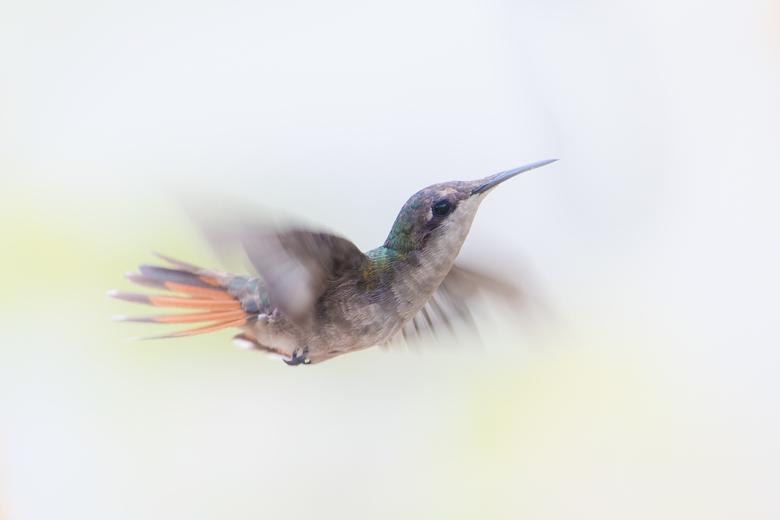 Heartbeat - Een kolibrie heeft een hartslag van zo'n 1200 slagen per minuut. Ondanks dat straalt deze foto rust en sereniteit uit.
