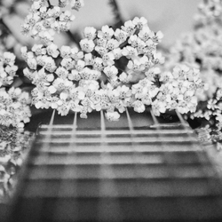 52 melodie'