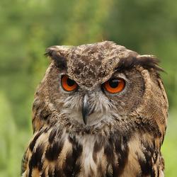 Grumpy....!