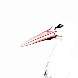 Stork in Light motion!