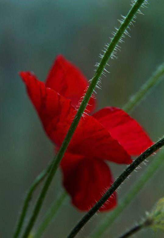 mooi rood is ...
