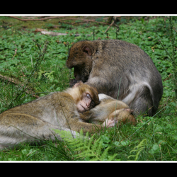uitrusten bij mams