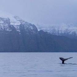 Walvisstaarten