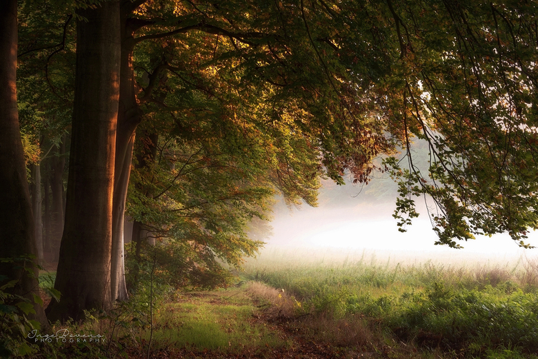 The Dawn of Autumn. -