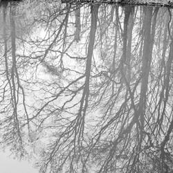 Gespiegelde bomen