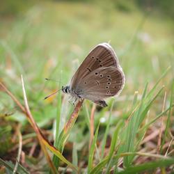 Butterfly in sumer field