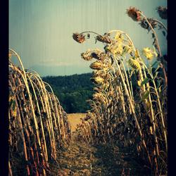 Summer's Ending...