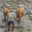Balineese boer