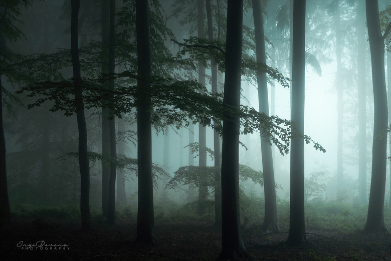 The Forest Awakens. -