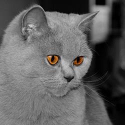 wat kunnen ogen toch mooi zijn van een dier