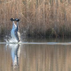 Dansen op het water.