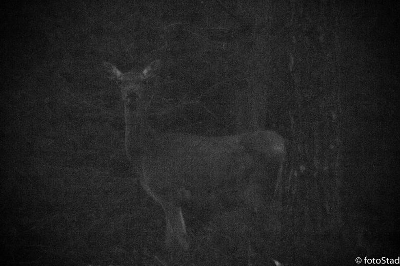 """In de schaduw van de nacht - Toch nog duidelijk te onderscheiden toch ? <img  src=""""/images/smileys/wilt.png""""/>"""