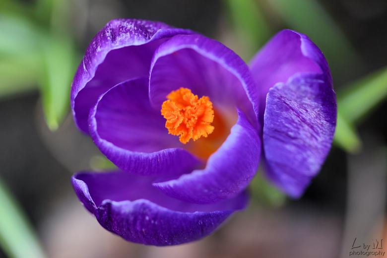 Bijna lente - Heerlijk! Bijna lente.