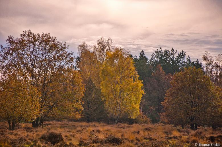 Herfst - Begin vorige maand deze foto gemaakt.