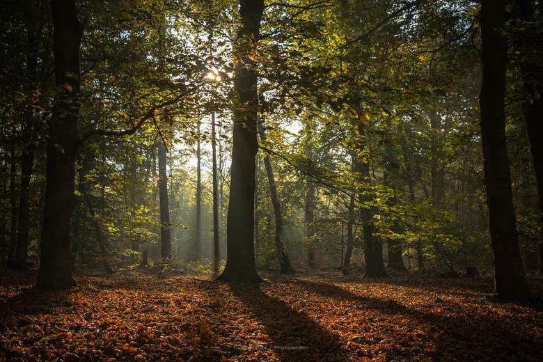 Goodmorning sunshine. - De nog laag staande zon, prikt tussen de bomen door.  Hierdoor ontstaan lange schaduwen en zonneharpen. Met tegenlicht komen d
