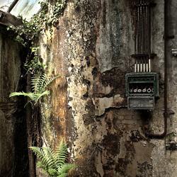 Muur met stoppenkast en wildgroei in verlaten oude fabriek