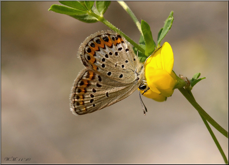 """So Sweet.... - Smullend van bloem naar bloem....<br /> Ik mis het wel hoor....<img  src=""""/images/smileys/wilt.png""""/><br /> <br /> De foto is genome"""