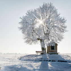 The chapel and the Tree
