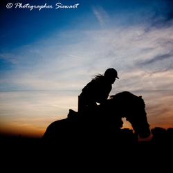 Horse Jumping Sunset