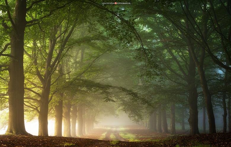 Pleasent summer mornings - Op een augustus ochtend op de Sallandse Heuvelrug met links het zonlicht vanuit de open heide.<br /> <br /> Groeten Frede