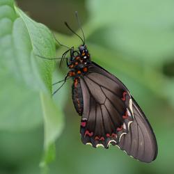 Vlinders in mijn leven