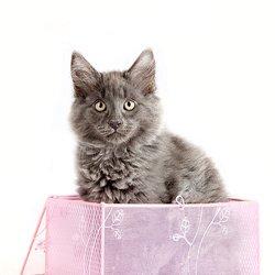 Duvel in een doosje