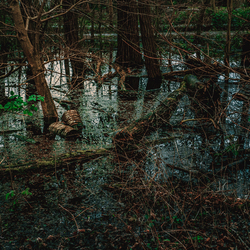 The forest is drowning