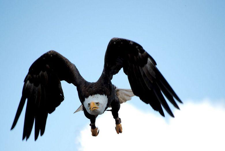 Vogelvlucht1 - vogelvlucht