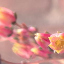 Lieve Cactus Bloempje