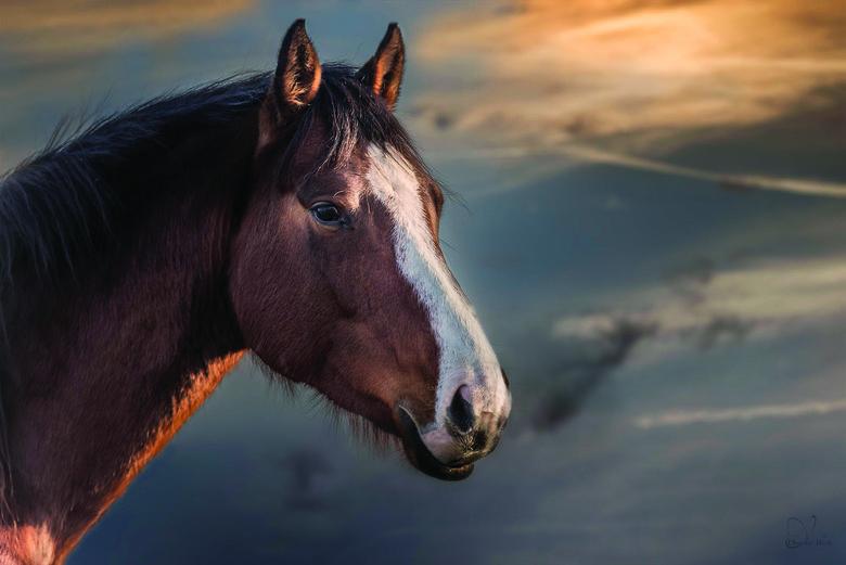 Vrij paard...