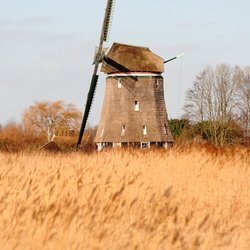 Wieken in Riet
