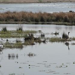 Waterplas in de Onlanden
