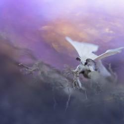 fairy's dream