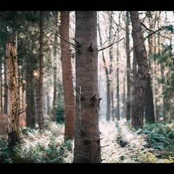 Tegenlicht boom