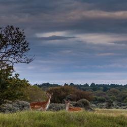 Holland safari