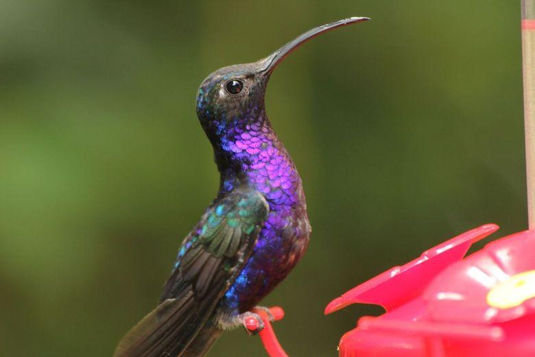 humming bird 3 - lastig om van humming bird foto,s te maken